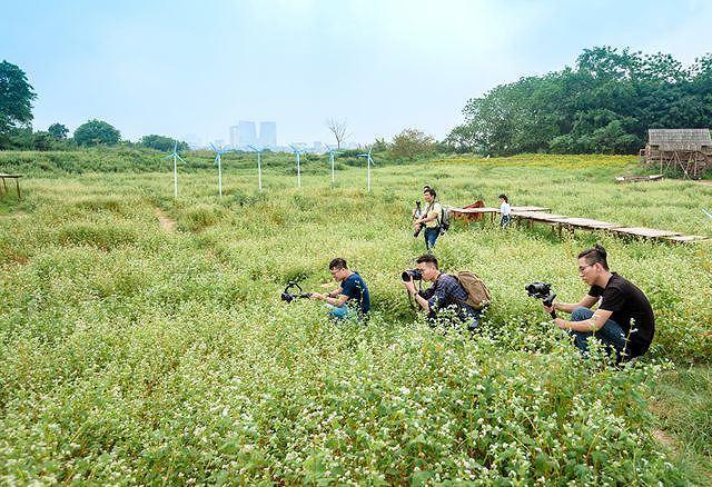 Mãn nhãn vườn hoa tam giác mạch gần 1 ha ở Hà Nội 'hút' khách tham quan Ảnh 10