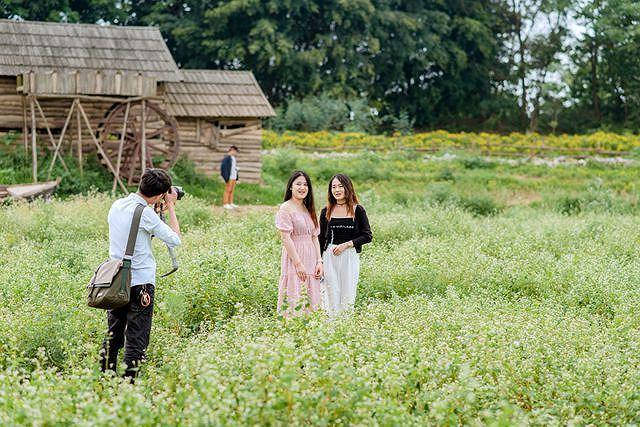 Mãn nhãn vườn hoa tam giác mạch gần 1 ha ở Hà Nội 'hút' khách tham quan Ảnh 5