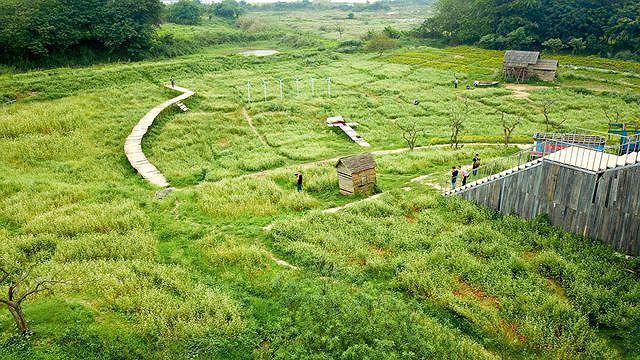 Mãn nhãn vườn hoa tam giác mạch gần 1 ha ở Hà Nội 'hút' khách tham quan Ảnh 1