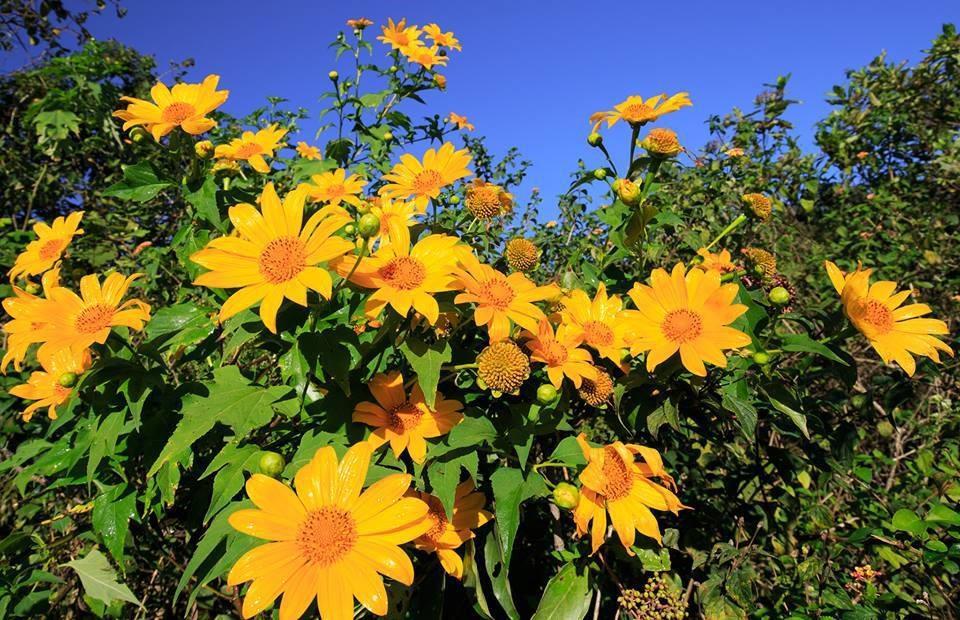 Đến Đà Lạt, nhất định không nên bỏ lỡ những vườn hoa đẹp nức tiếng này Ảnh 9