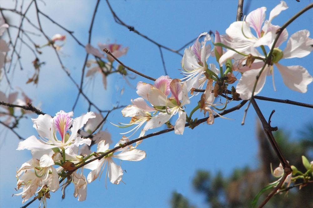 Đến Đà Lạt, nhất định không nên bỏ lỡ những vườn hoa đẹp nức tiếng này Ảnh 7