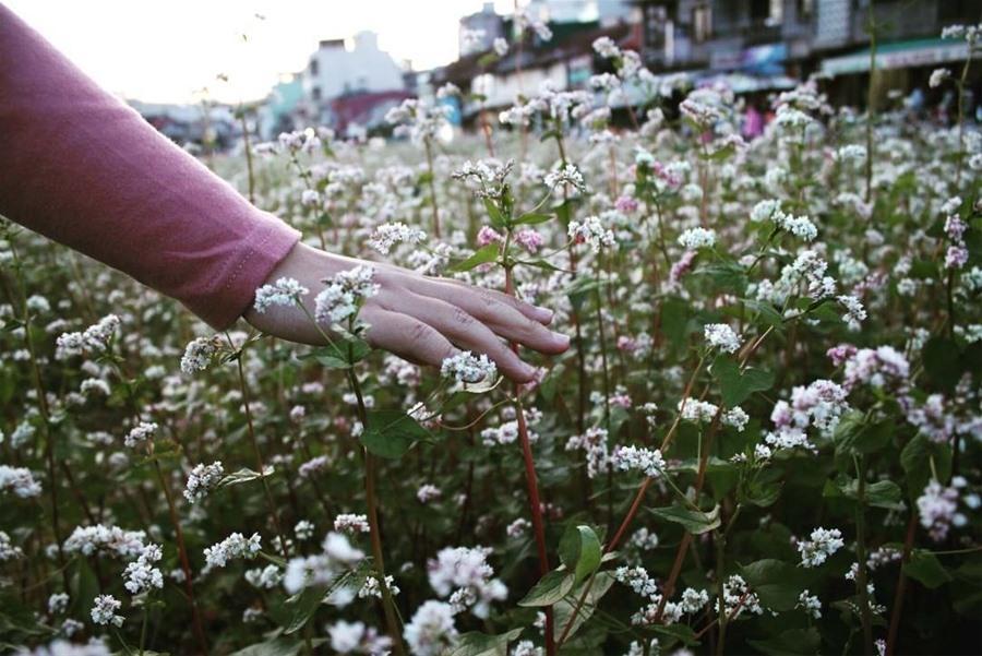 Đến Đà Lạt, nhất định không nên bỏ lỡ những vườn hoa đẹp nức tiếng này Ảnh 6