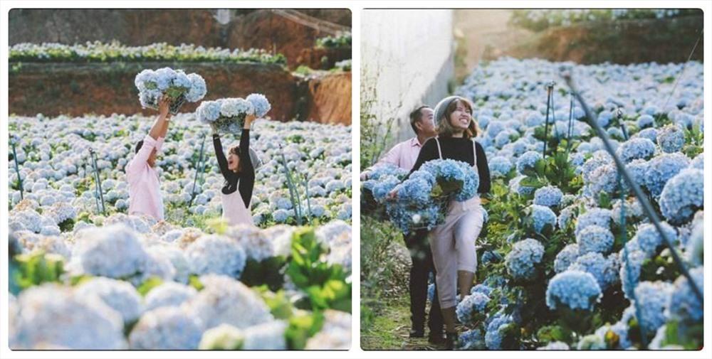 Đến Đà Lạt, nhất định không nên bỏ lỡ những vườn hoa đẹp nức tiếng này Ảnh 1
