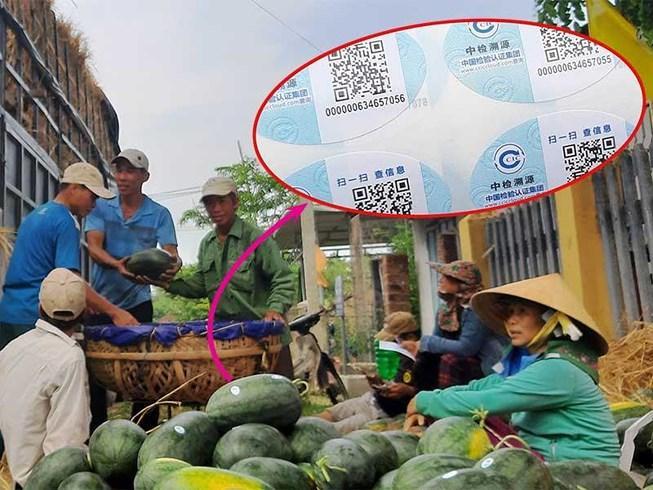 Dưa hấu Việt dán tem Trung Quốc là không sai Ảnh 1
