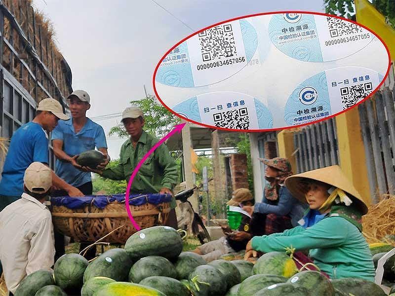 Dưa hấu Việt dán tem Trung Quốc là không sai Ảnh 2
