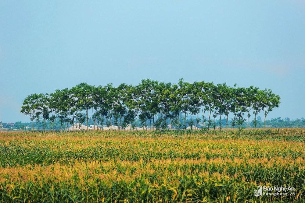 Những mảng đồng quê xanh trong con nắng đầu mùa Ảnh 1