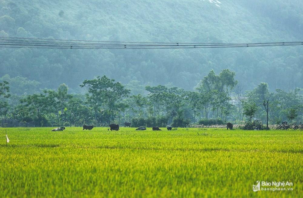 Những mảng đồng quê xanh trong con nắng đầu mùa Ảnh 7