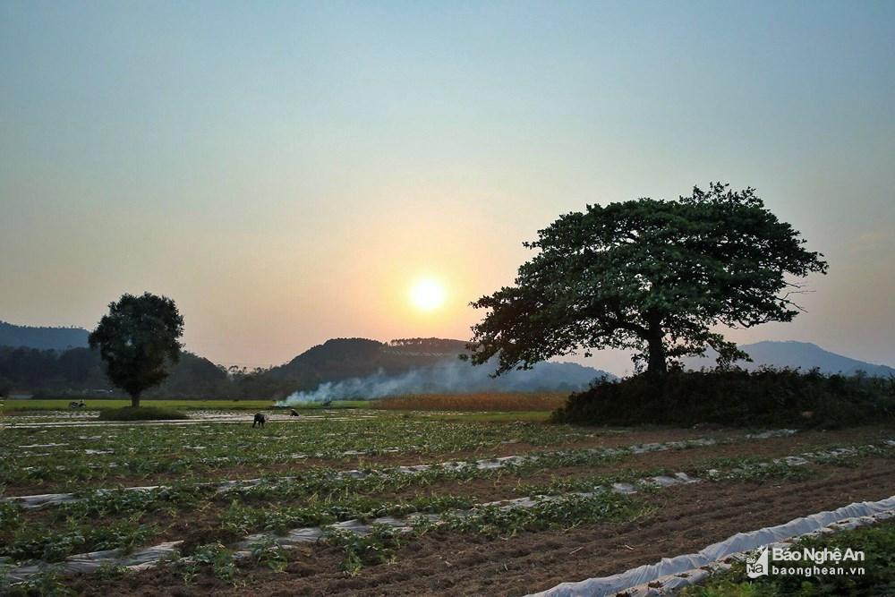 Những mảng đồng quê xanh trong con nắng đầu mùa Ảnh 8