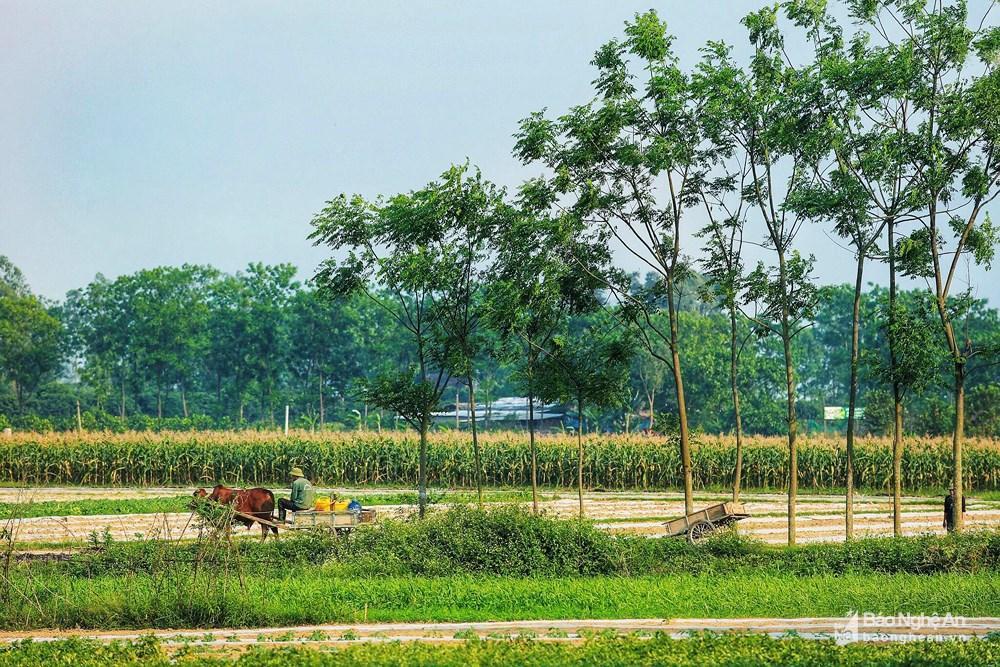 Những mảng đồng quê xanh trong con nắng đầu mùa Ảnh 3