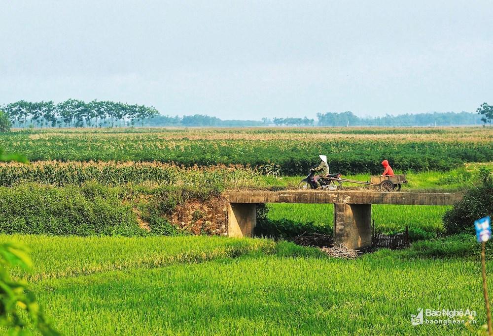 Những mảng đồng quê xanh trong con nắng đầu mùa Ảnh 6