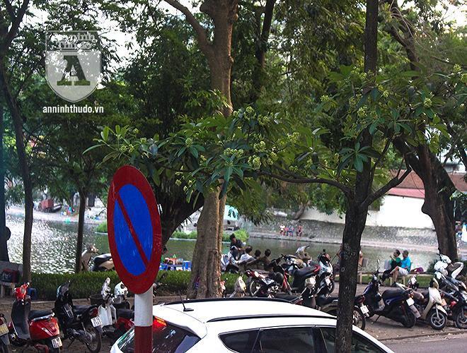 Kỳ lạ hoa sữa nở giữa mùa hè khắp phố phường Hà Nội Ảnh 12