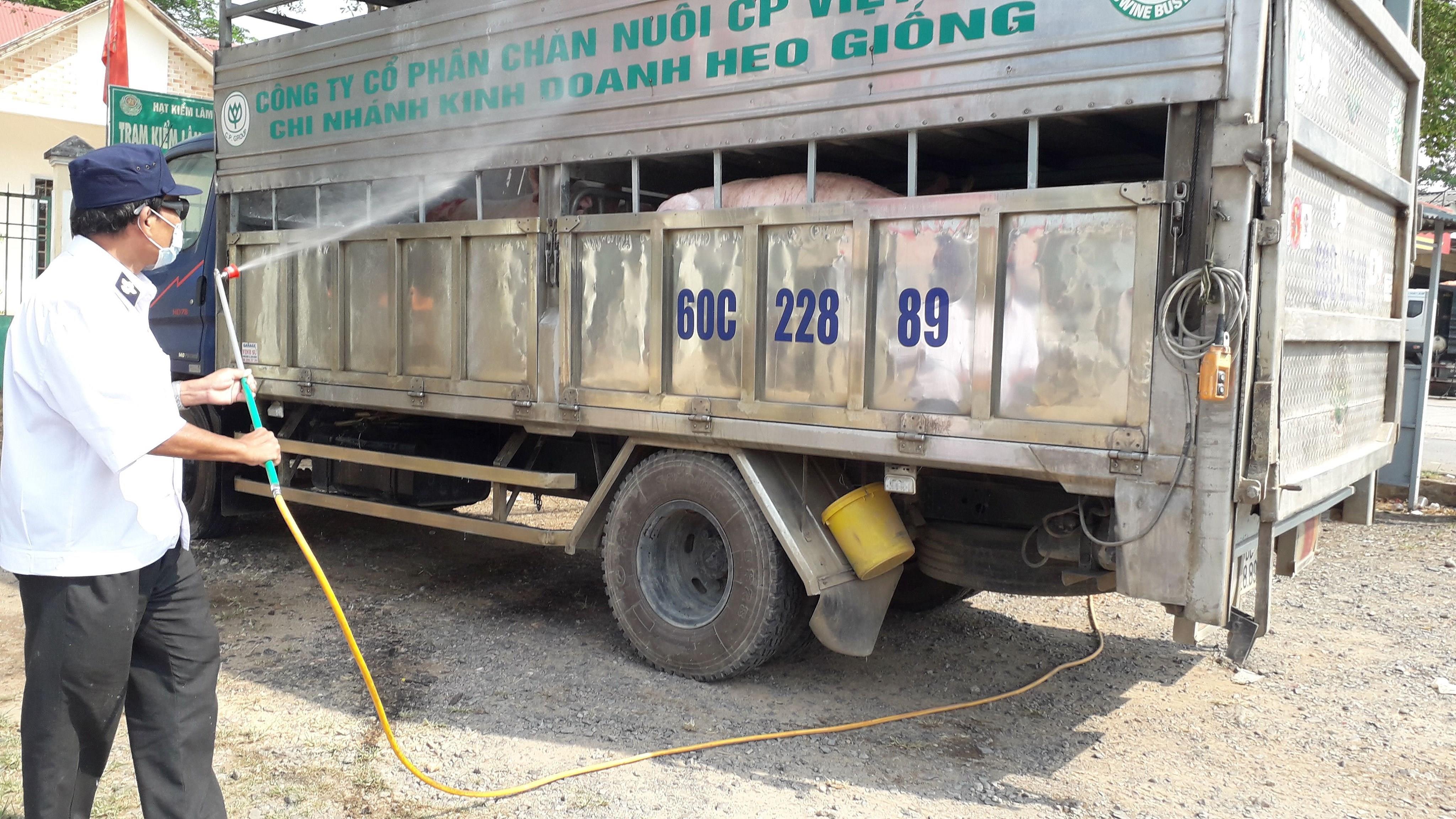 Nhiều hộ chăn nuôi nhỏ lẻ vẫn chủ quan trong việc phòng chống dịch tả heo châu Phi Ảnh 1