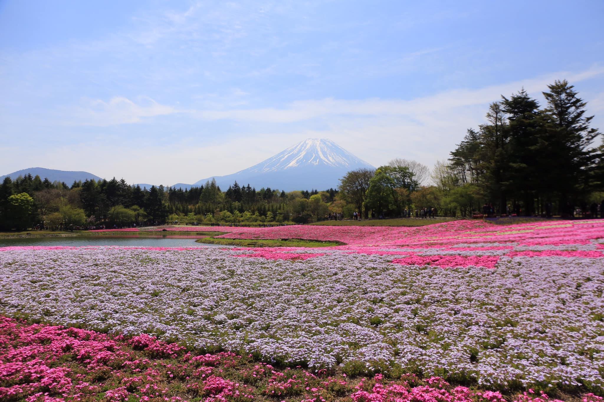 4 lí do khiến bạn xách ba lô du lịch Nhật Bản ngay mùa hè Ảnh 1