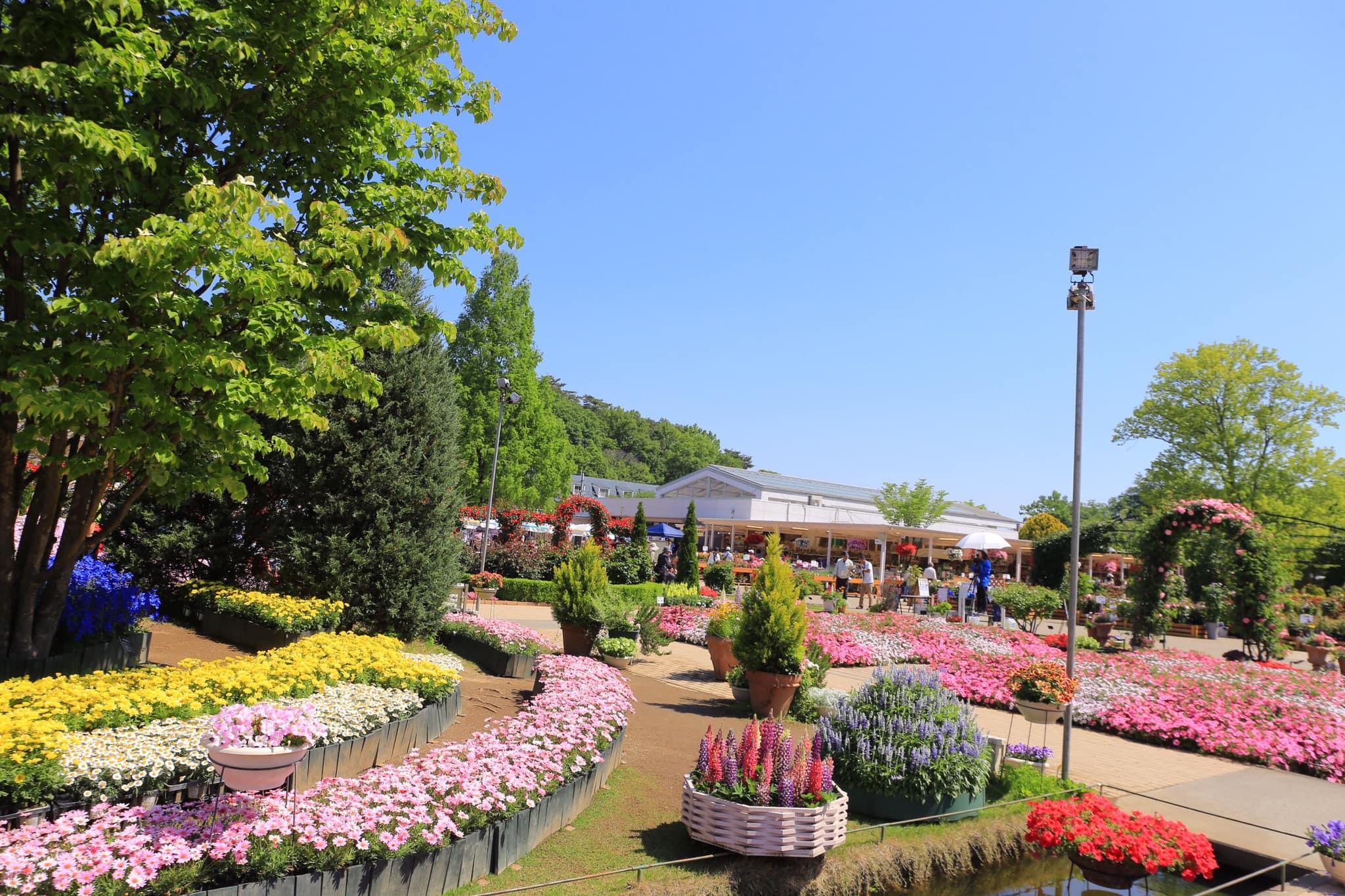 4 lí do khiến bạn xách ba lô du lịch Nhật Bản ngay mùa hè Ảnh 2