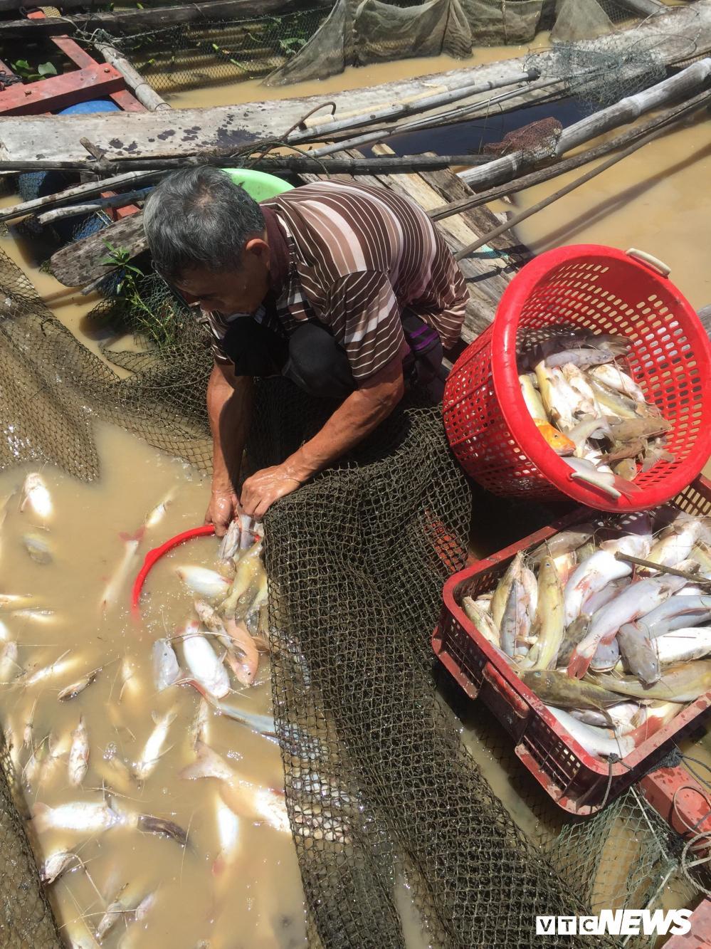 Gần 1000 tấn cá chết trắng sông La Ngà ở Đồng Nai Ảnh 1