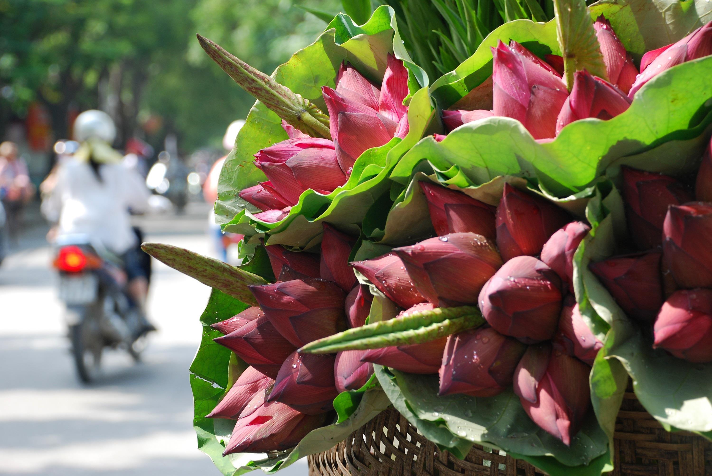 Hà Nội rực rỡ trong những sắc hoa mùa hè Ảnh 39
