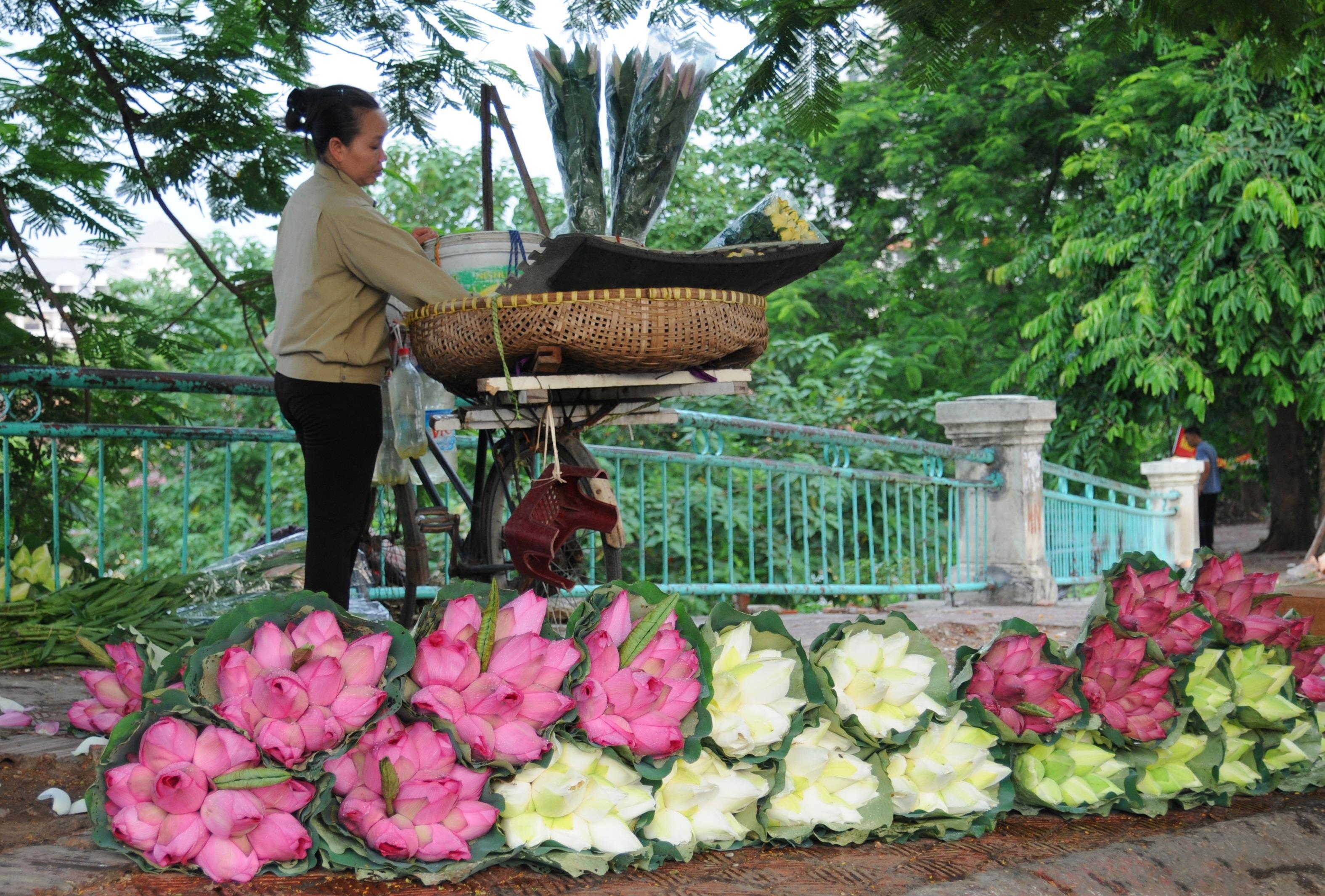 Hà Nội rực rỡ trong những sắc hoa mùa hè Ảnh 38
