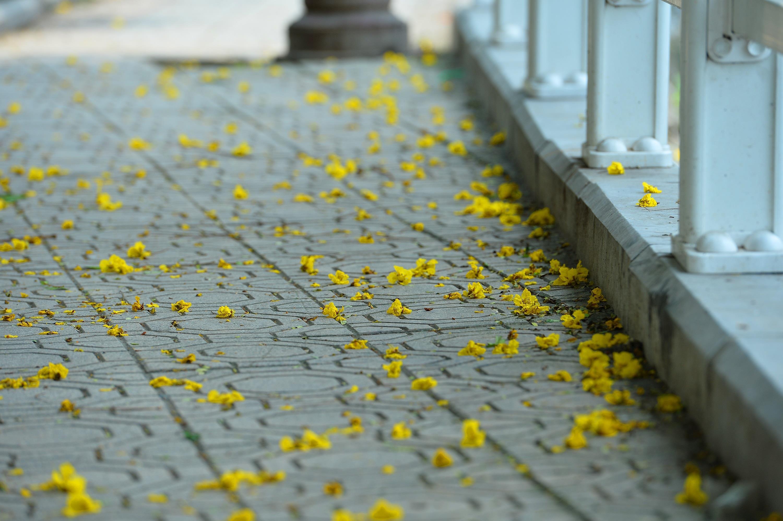 Hà Nội rực rỡ trong những sắc hoa mùa hè Ảnh 32