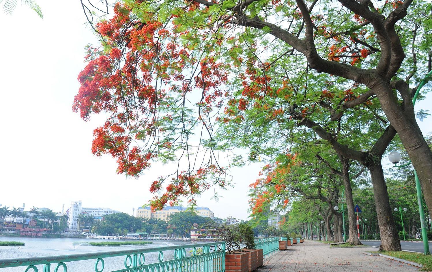Hà Nội rực rỡ trong những sắc hoa mùa hè Ảnh 26