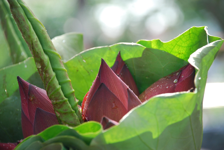 Hà Nội rực rỡ trong những sắc hoa mùa hè Ảnh 47