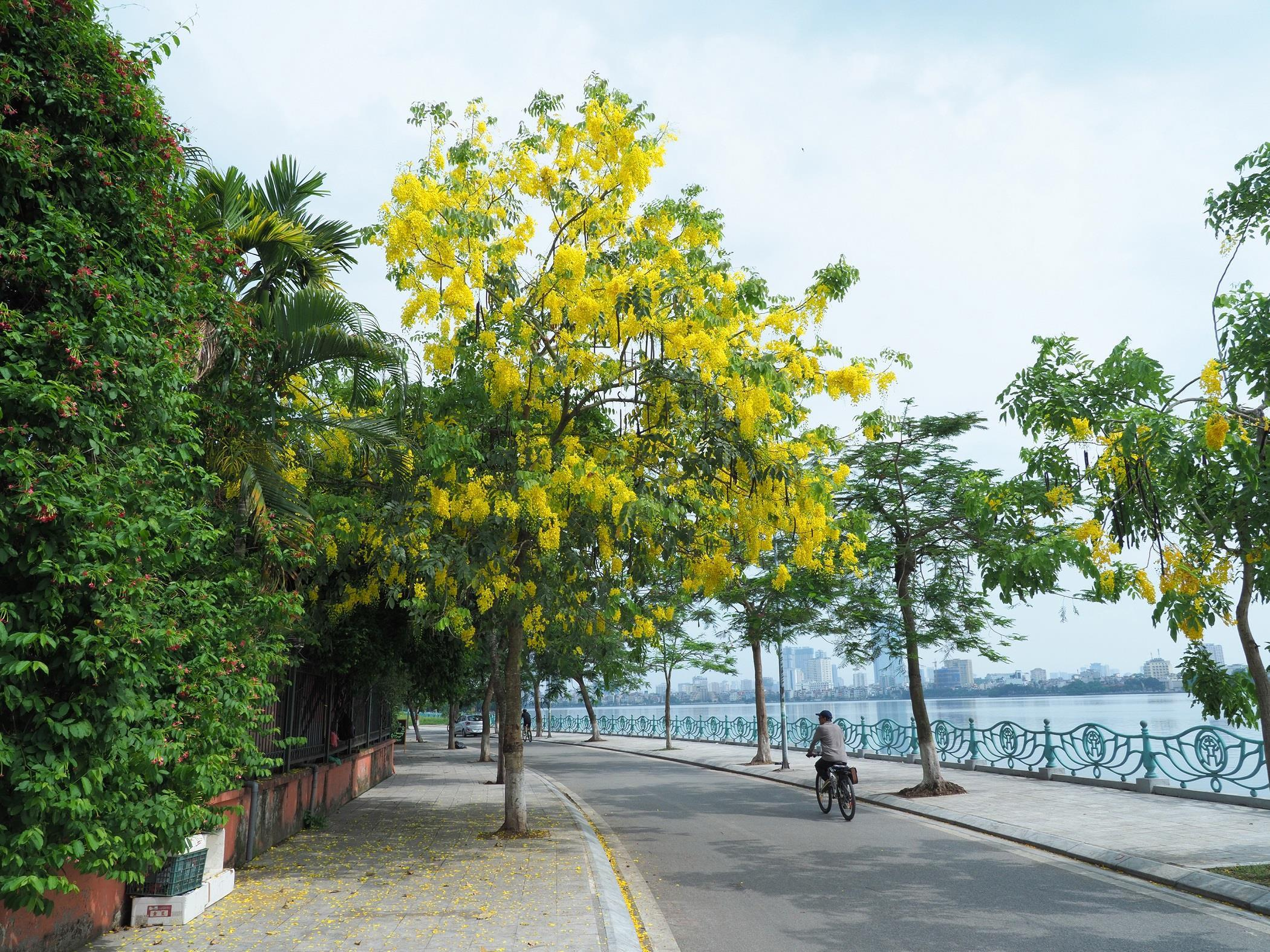 Hà Nội rực rỡ trong những sắc hoa mùa hè Ảnh 37