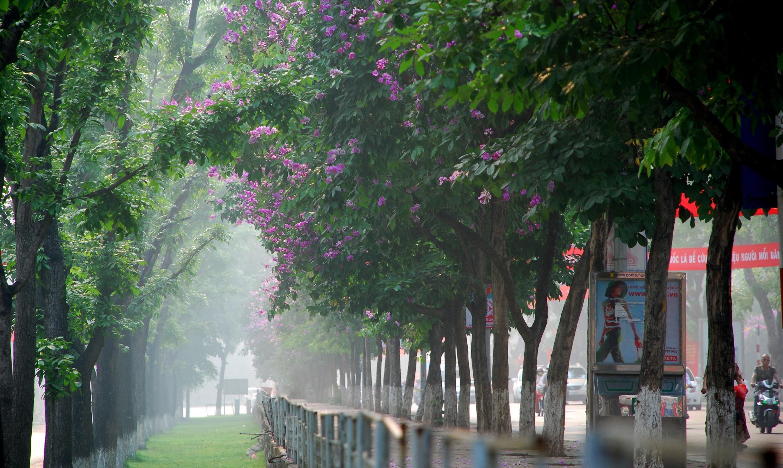 Hà Nội rực rỡ trong những sắc hoa mùa hè Ảnh 11