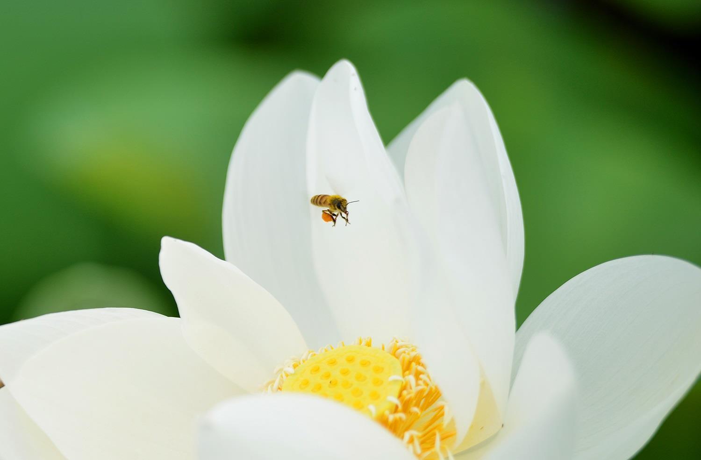 Hà Nội rực rỡ trong những sắc hoa mùa hè Ảnh 44