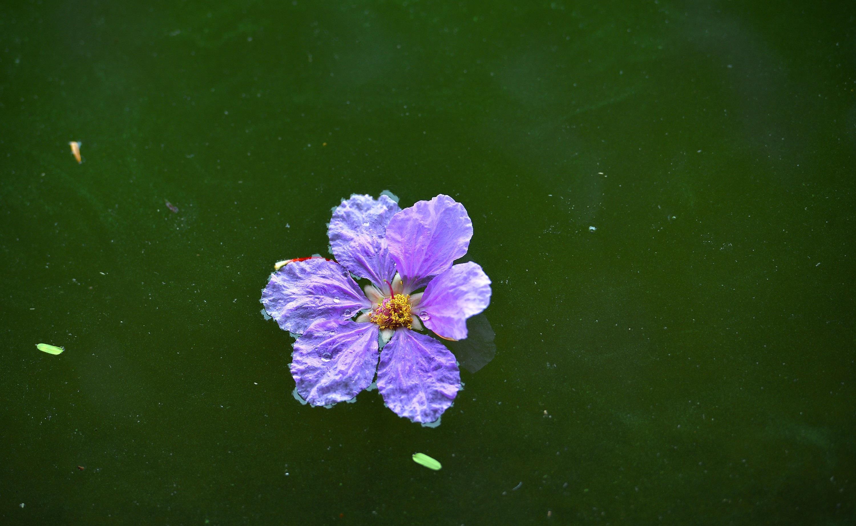 Hà Nội rực rỡ trong những sắc hoa mùa hè Ảnh 5