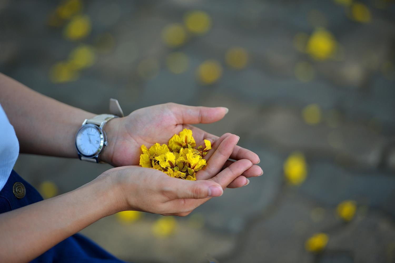 Hà Nội rực rỡ trong những sắc hoa mùa hè Ảnh 31