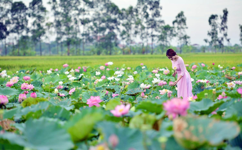 Hà Nội rực rỡ trong những sắc hoa mùa hè Ảnh 49