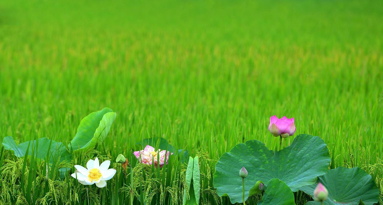 Hà Nội rực rỡ trong những sắc hoa mùa hè Ảnh 51