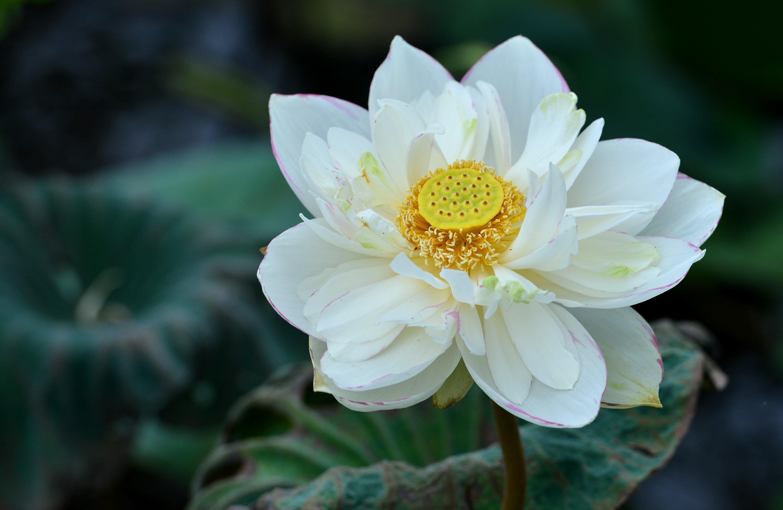 Hà Nội rực rỡ trong những sắc hoa mùa hè Ảnh 42