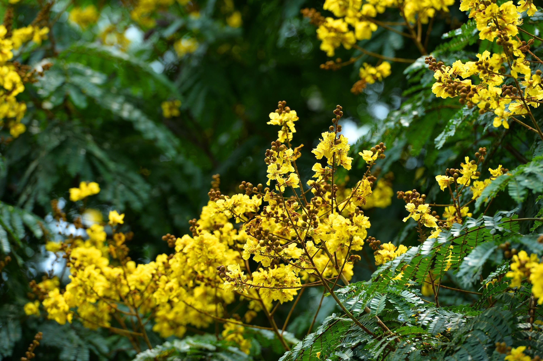 Hà Nội rực rỡ trong những sắc hoa mùa hè Ảnh 30