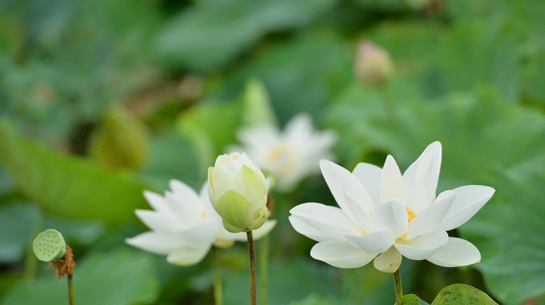Hà Nội rực rỡ trong những sắc hoa mùa hè Ảnh 45