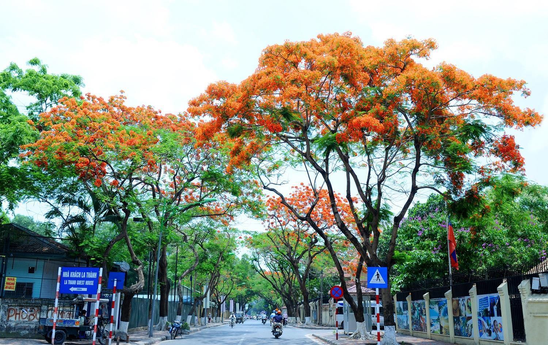 Hà Nội rực rỡ trong những sắc hoa mùa hè Ảnh 18