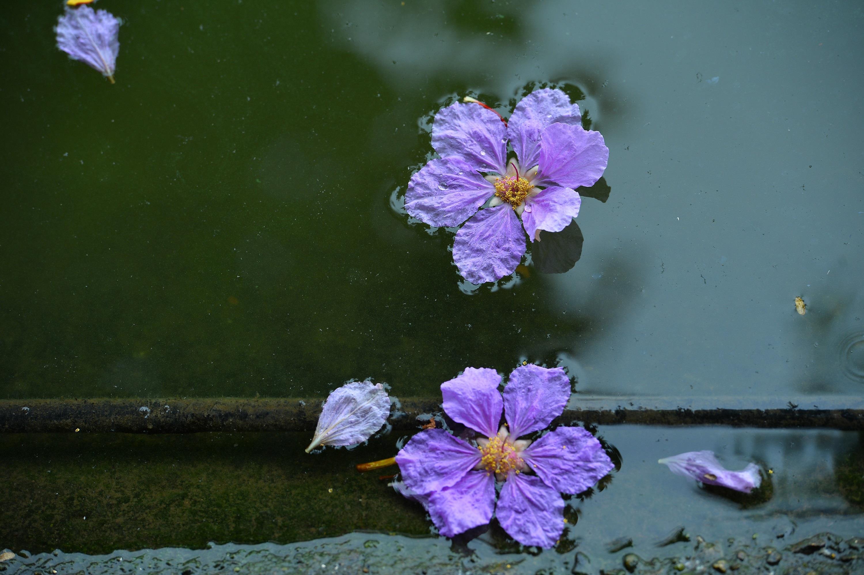Hà Nội rực rỡ trong những sắc hoa mùa hè Ảnh 6