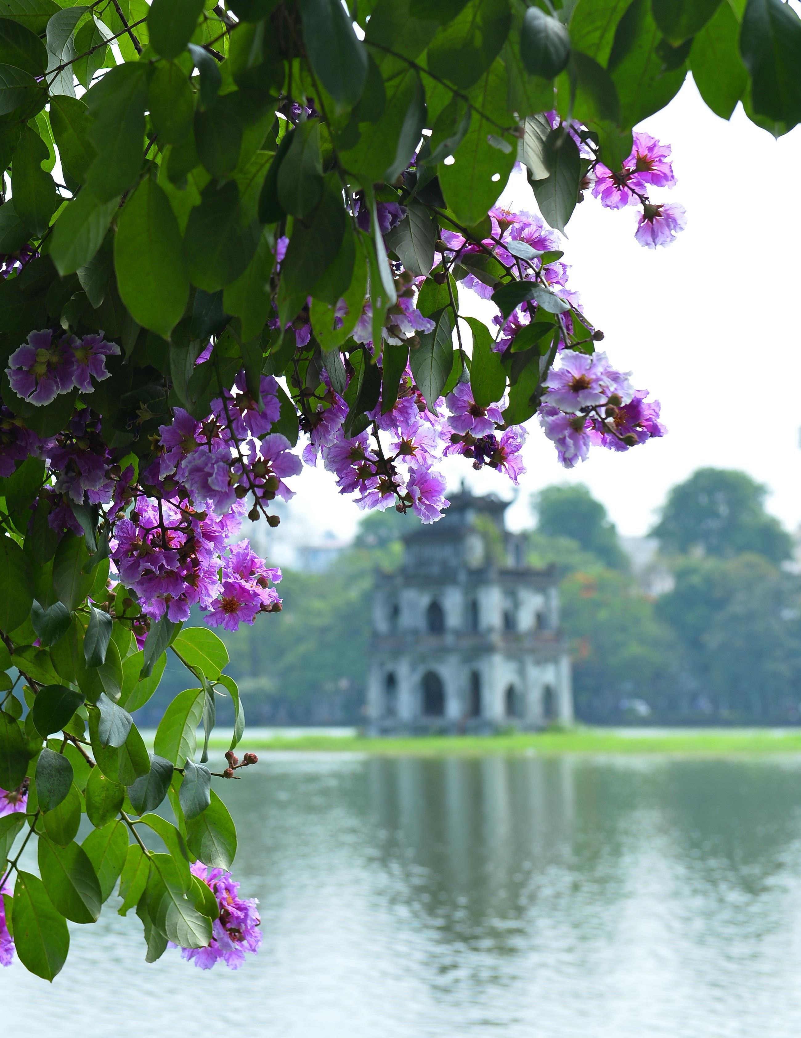 Hà Nội rực rỡ trong những sắc hoa mùa hè Ảnh 1
