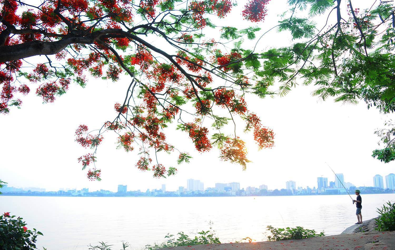 Hà Nội rực rỡ trong những sắc hoa mùa hè Ảnh 14