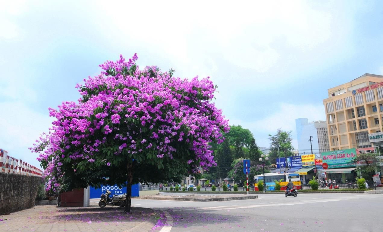 Hà Nội rực rỡ trong những sắc hoa mùa hè Ảnh 9