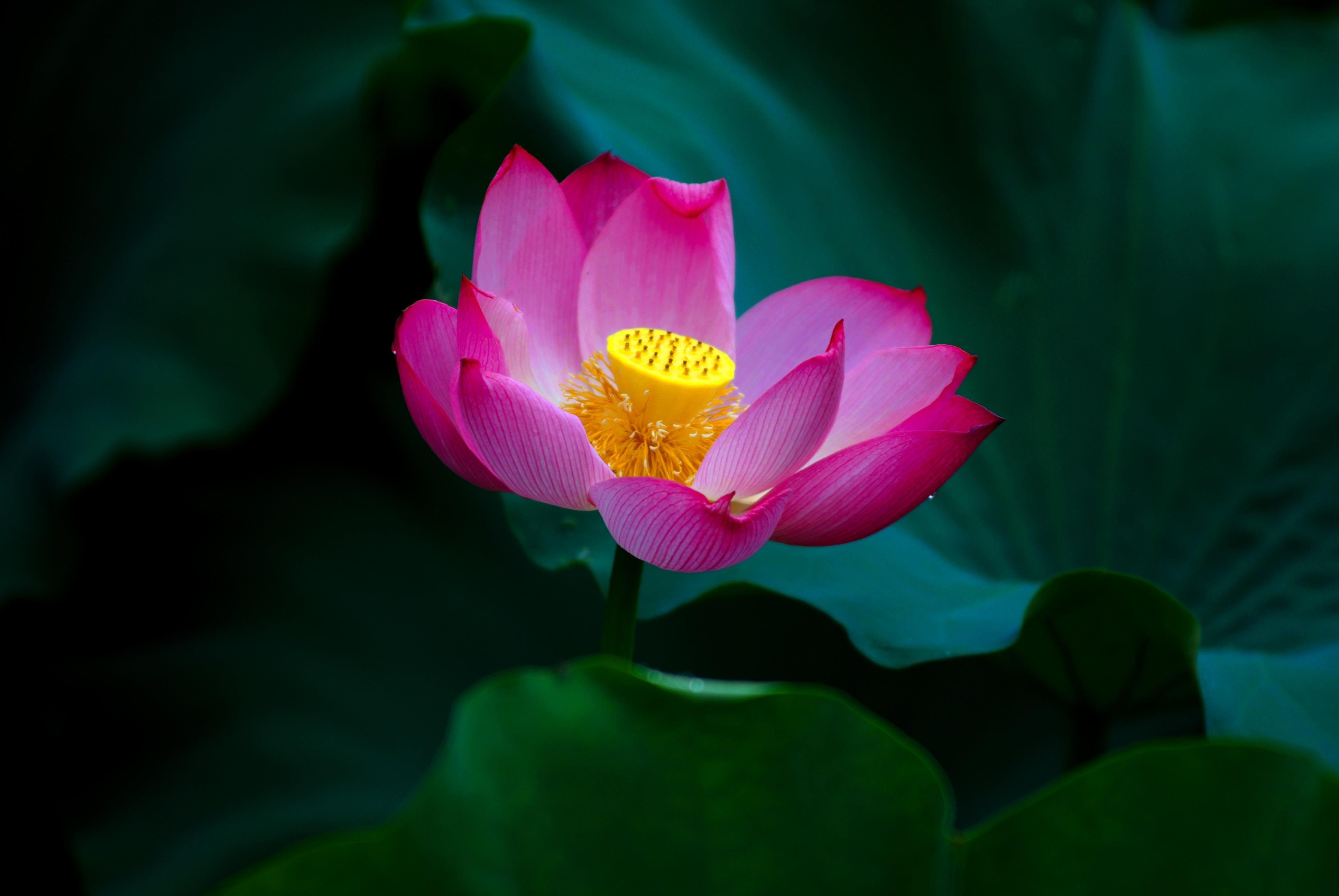 Hà Nội rực rỡ trong những sắc hoa mùa hè Ảnh 41