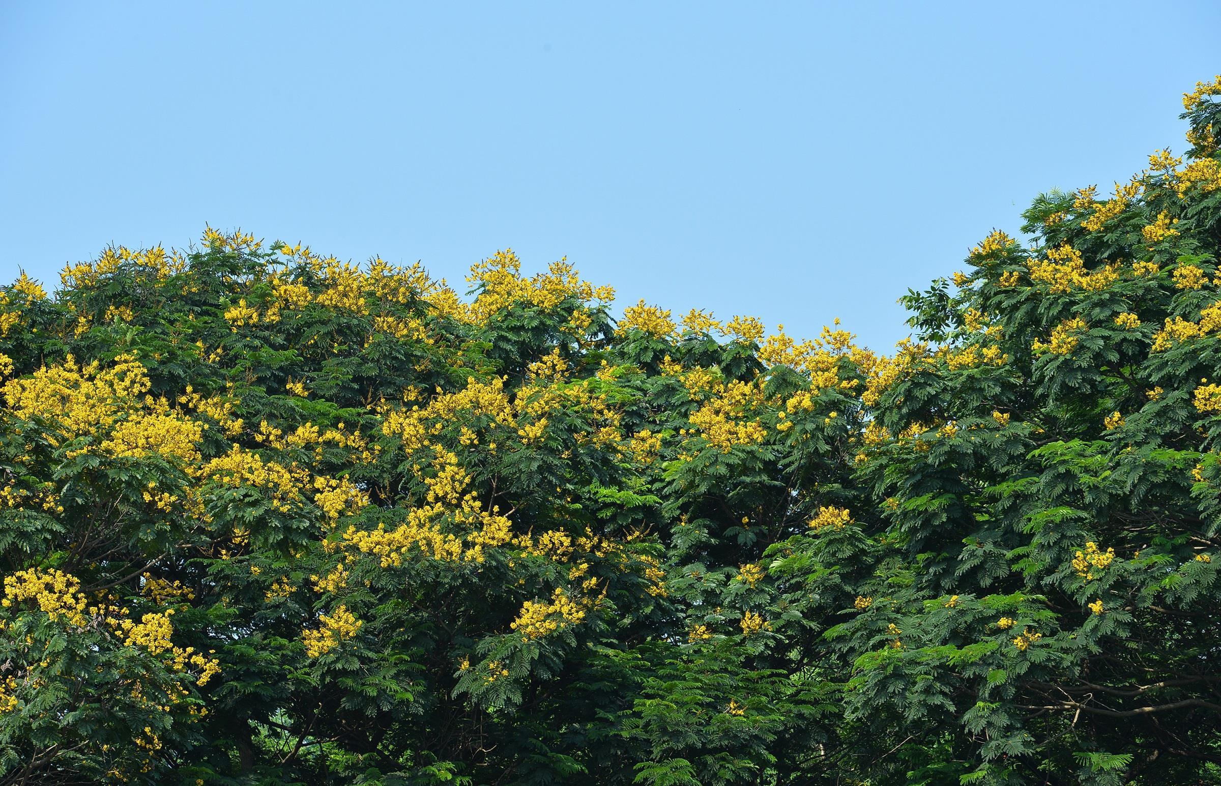 Hà Nội rực rỡ trong những sắc hoa mùa hè Ảnh 29