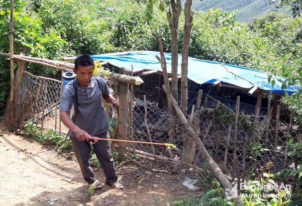 Lợn chết ở xã biên giới Keng Đu (Kỳ Sơn) là do bệnh tụ huyết trùng Ảnh 2