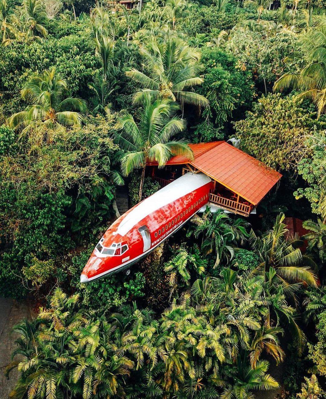 Thức giấc giữa rừng trên chuyến bay không bao giờ khởi hành Ảnh 2
