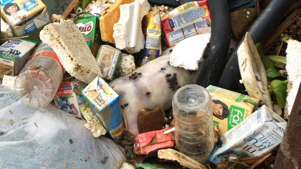 Xác lợn nổi lềnh bềnh trên kênh nước thô cấp cho nhà máy nước sạch Thanh Hóa Ảnh 2