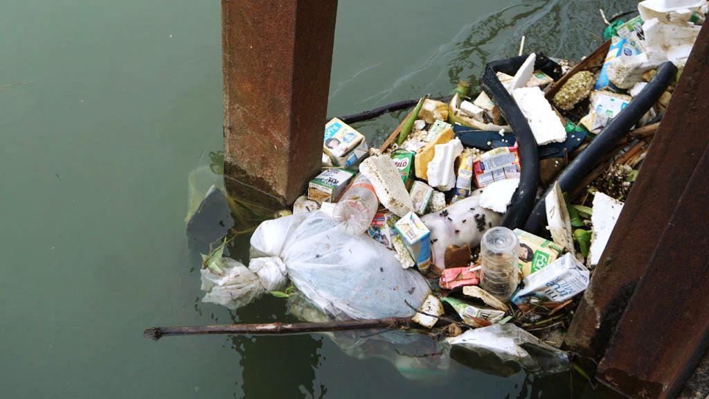 Xác lợn nổi lềnh bềnh trên kênh nước thô cấp cho nhà máy nước sạch Thanh Hóa Ảnh 1