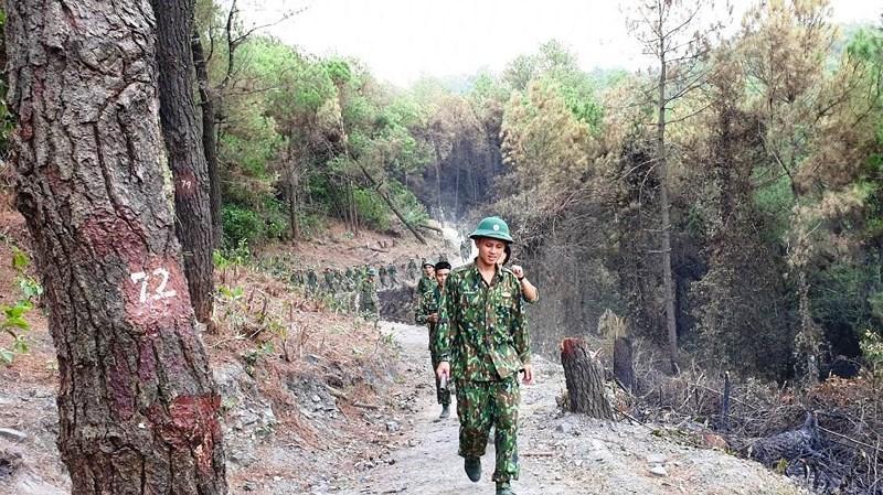 Chùm ảnh: Rừng thông Hồng Lĩnh 'chết đứng' sau cháy rừng Ảnh 11