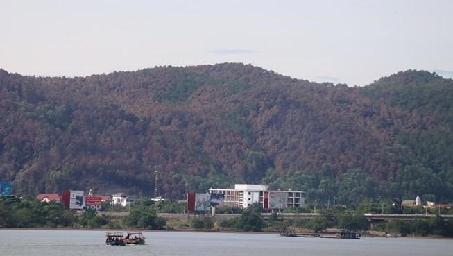 Chùm ảnh: Rừng thông Hồng Lĩnh 'chết đứng' sau cháy rừng Ảnh 1