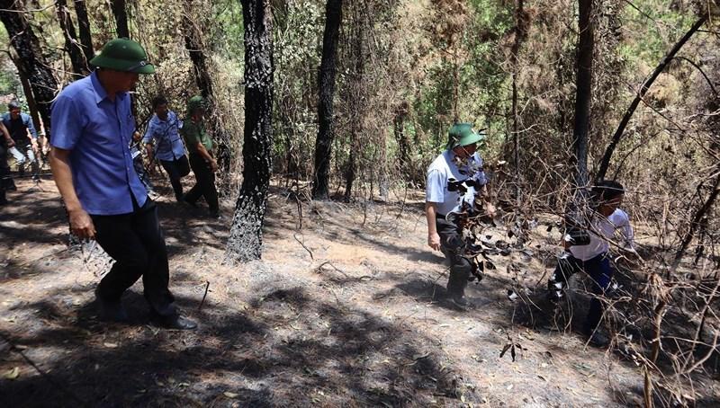 Chùm ảnh: Rừng thông Hồng Lĩnh 'chết đứng' sau cháy rừng Ảnh 7
