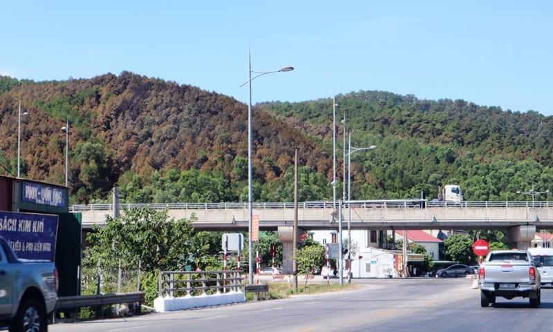 Chùm ảnh: Rừng thông Hồng Lĩnh 'chết đứng' sau cháy rừng Ảnh 4
