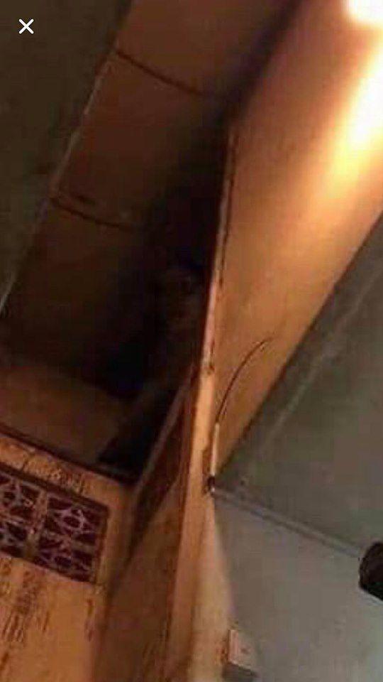 Thực hư câu chuyện sau bức hình về 'hồn ma nữ' ám ảnh khu nhà trọ Ảnh 3